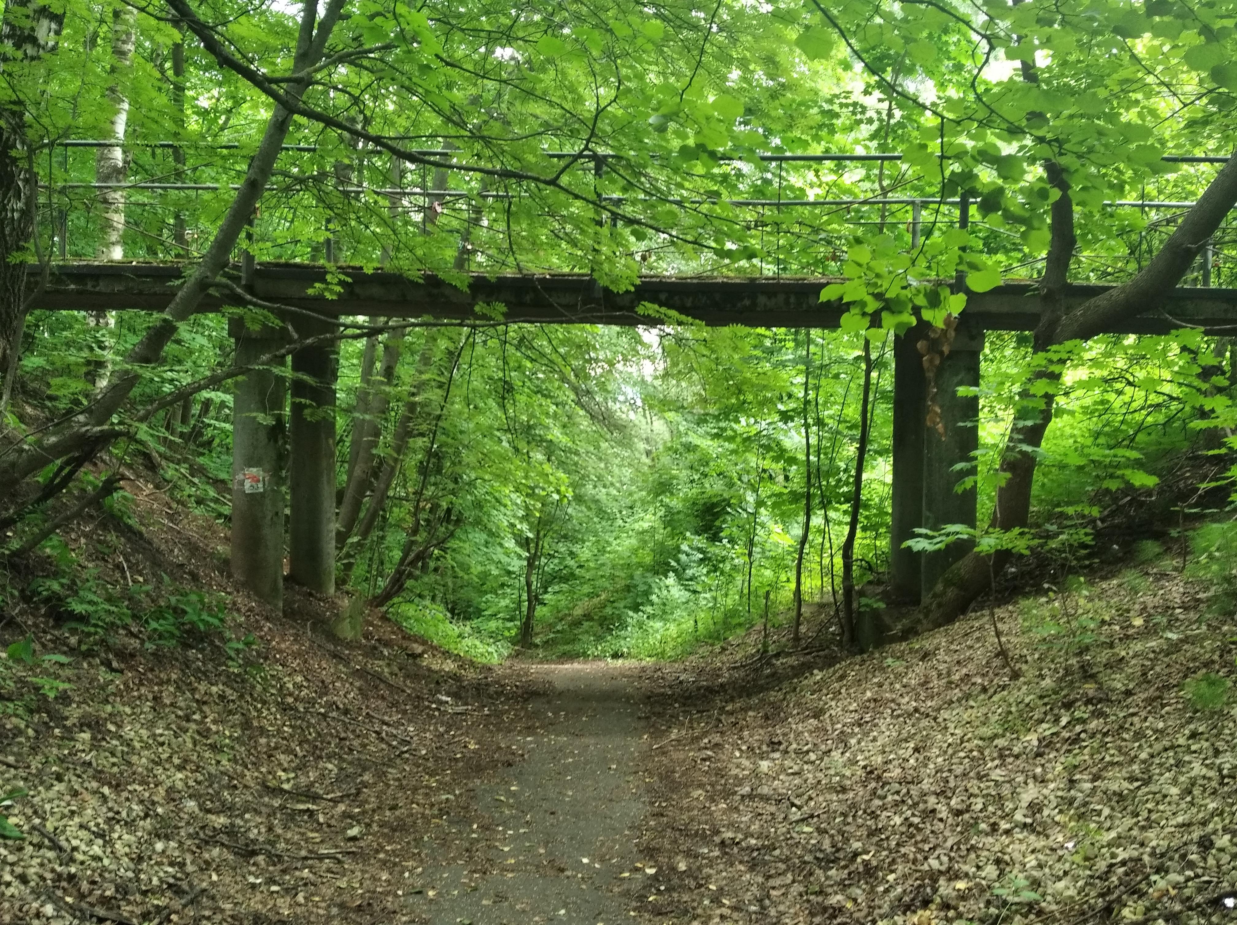 Мнение эксперта: оползни могут произойти на склонах парка «Швейцария» из-за неправильного благоустройства